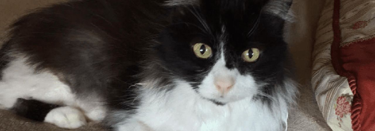 Mogli the Cat that Takes CBD Oil